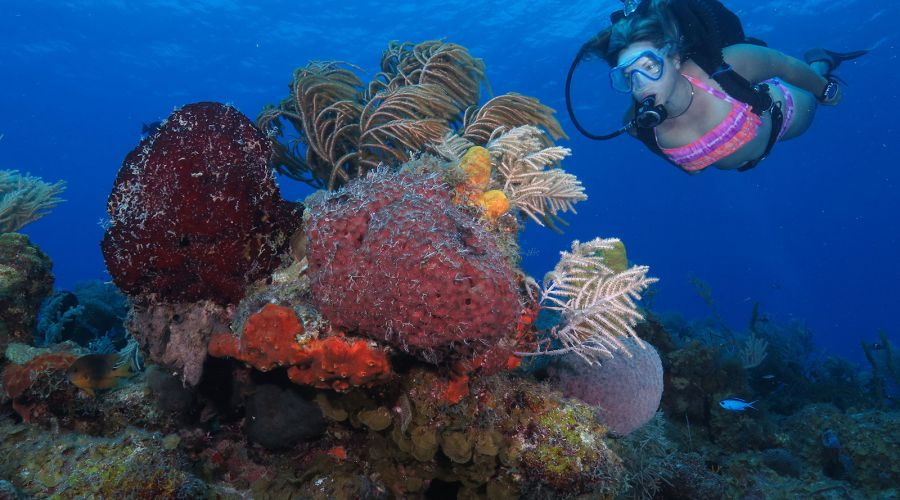 Reef-maria-la-Gorda-Diving-Center-Pinar-del-Rio