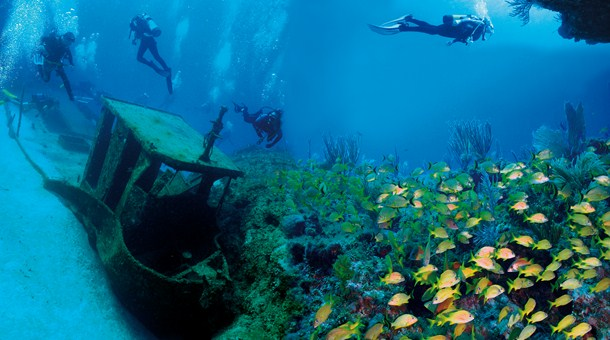 Live the experience of diving in the beauty beaches of the Caribbean sea, Cuba.