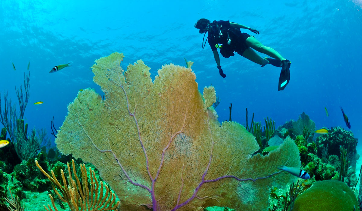 Discover our natural coral reefs.