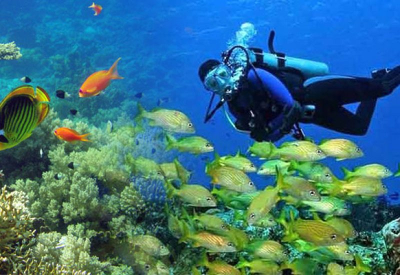 Enjoy the richness of Cuba's seawater life.