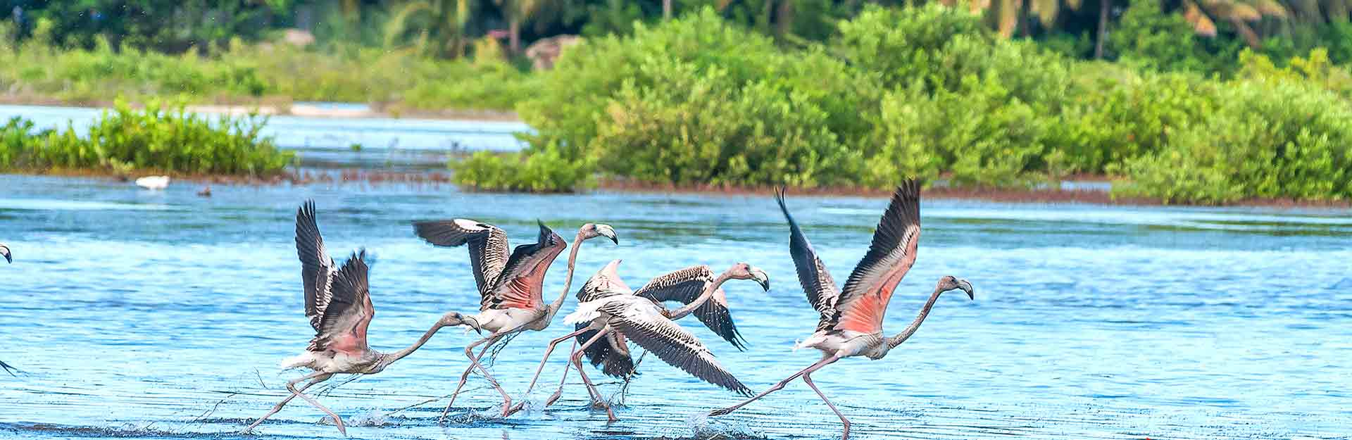 Flamants roses, tourisme de nature, Cuba Travel